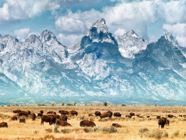 seeing is believing in jackson hole